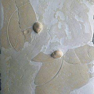 Mer des ondes - 2007, plâtre et terre cuite, 54 x 65 cm